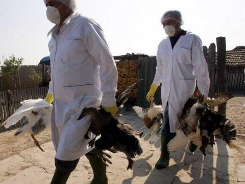 Κρούσμα γρίπης των πτηνών στην Κοζάνη