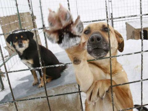 Καταφύγιο αδέσποτων ζώων στο δήμο Πέλλας