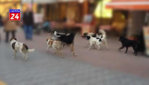 Σύσκεψη για τα αδέσποτα ζώα