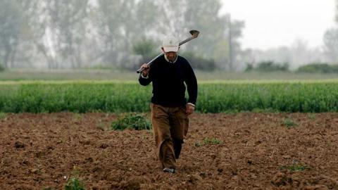 Συνταξιούχος Αγρότης εργάζεται